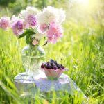 cherries-1450154_640