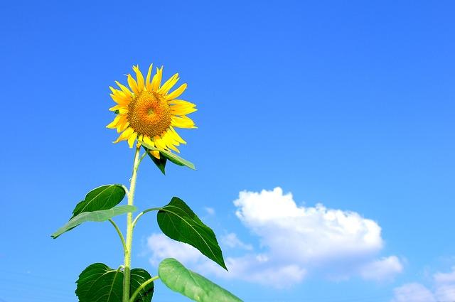 【8月】風物詩・季語・時候の挨拶一覧!目上の人や友人への使い分けの文例