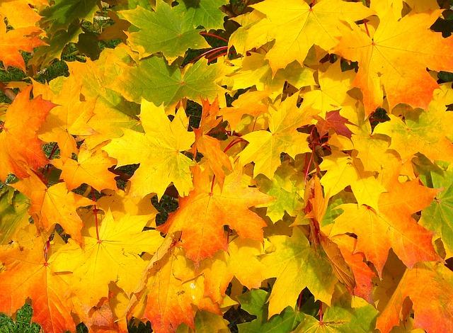 【10月といえば】風物詩・時候の挨拶文例・季語一覧