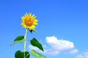 【8月といえば】風物詩・時候の挨拶文例・季語一覧