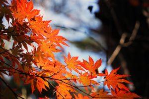 【11月といえば】風物詩・時候の挨拶文例・季語一覧