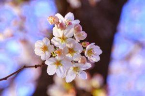 【4月といえば】風物詩・時候の挨拶文例・季語一覧