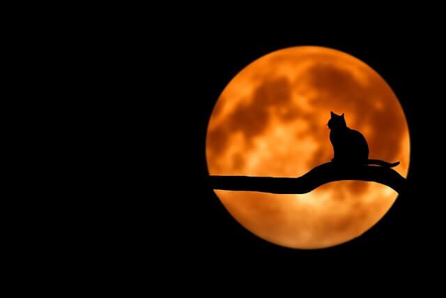 【夢占い】月が出てくる夢21パターンの意味
